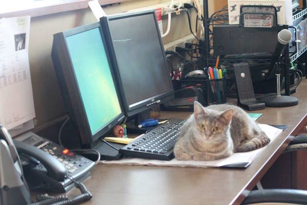 cat on a desk